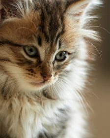home remedies for cat allergies