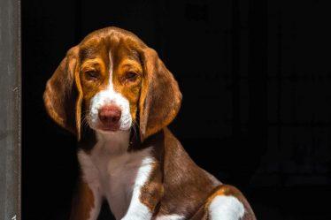 Dog Allergy Symptoms & Solutions