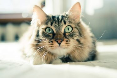 helping your cat with food allergies