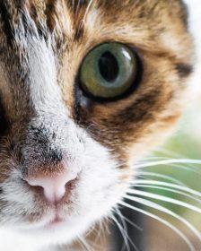 managing your cat allergies