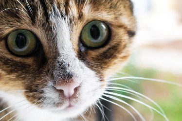 managing your cat allergies