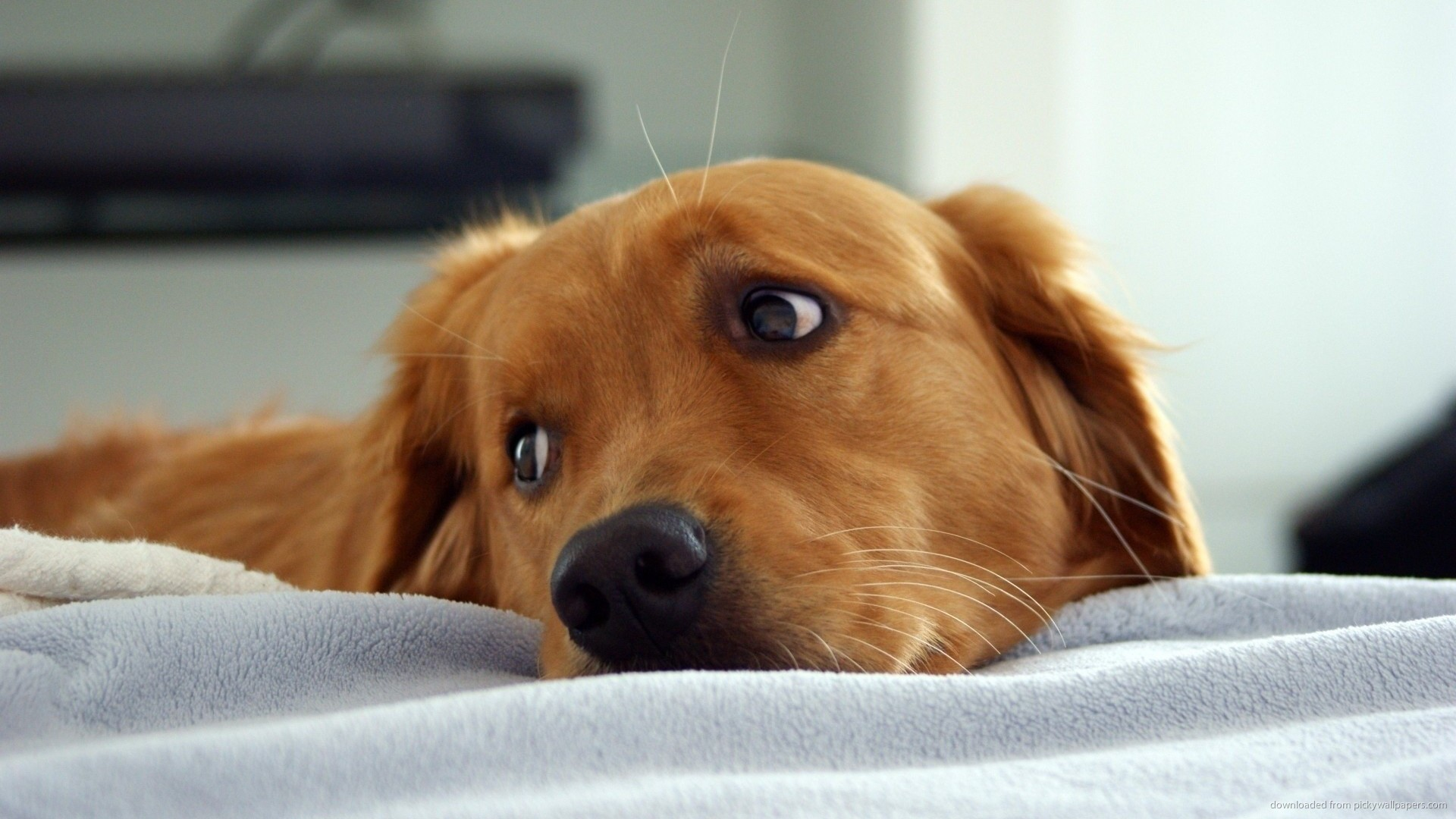 Dog Health Concerns and Solutions