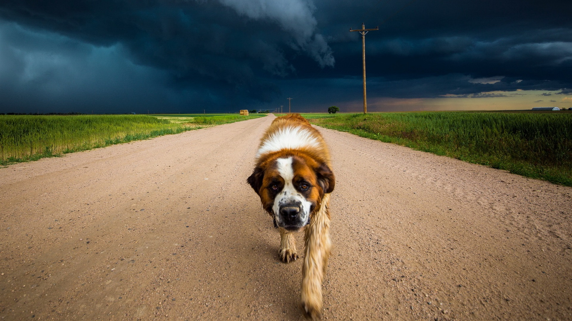 Protect Your Dog in Natural Disasters