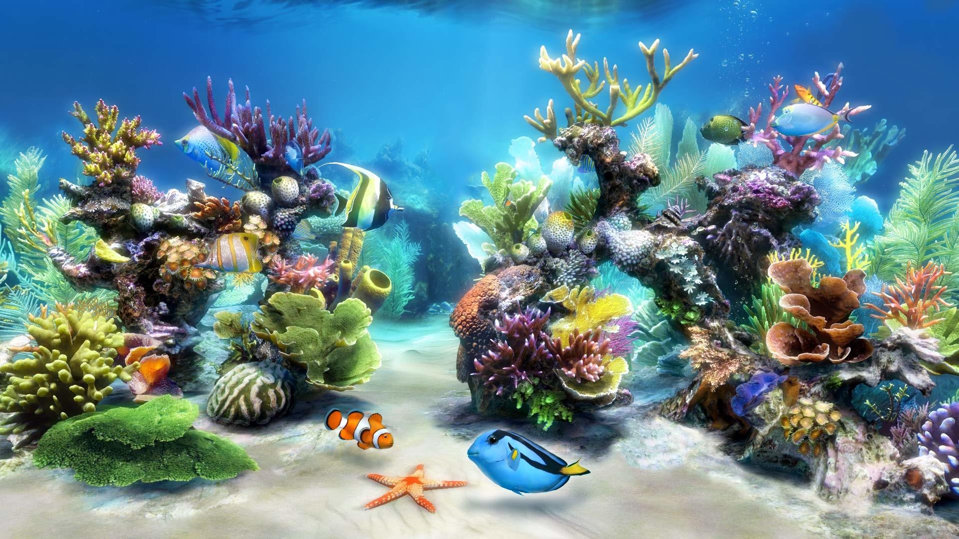 Aquarium Accessories for Your New Fish Tank