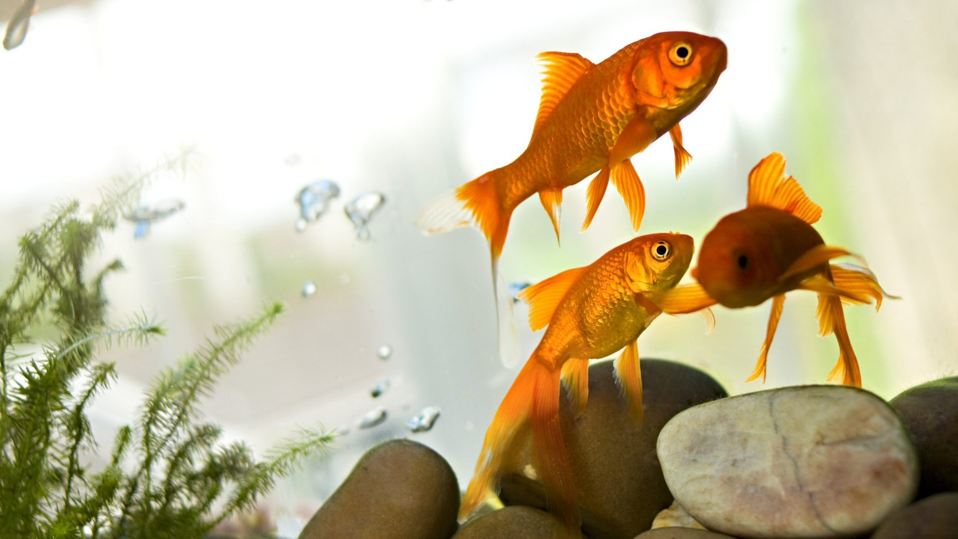 The Best Fish for a 5 Gallon Tank