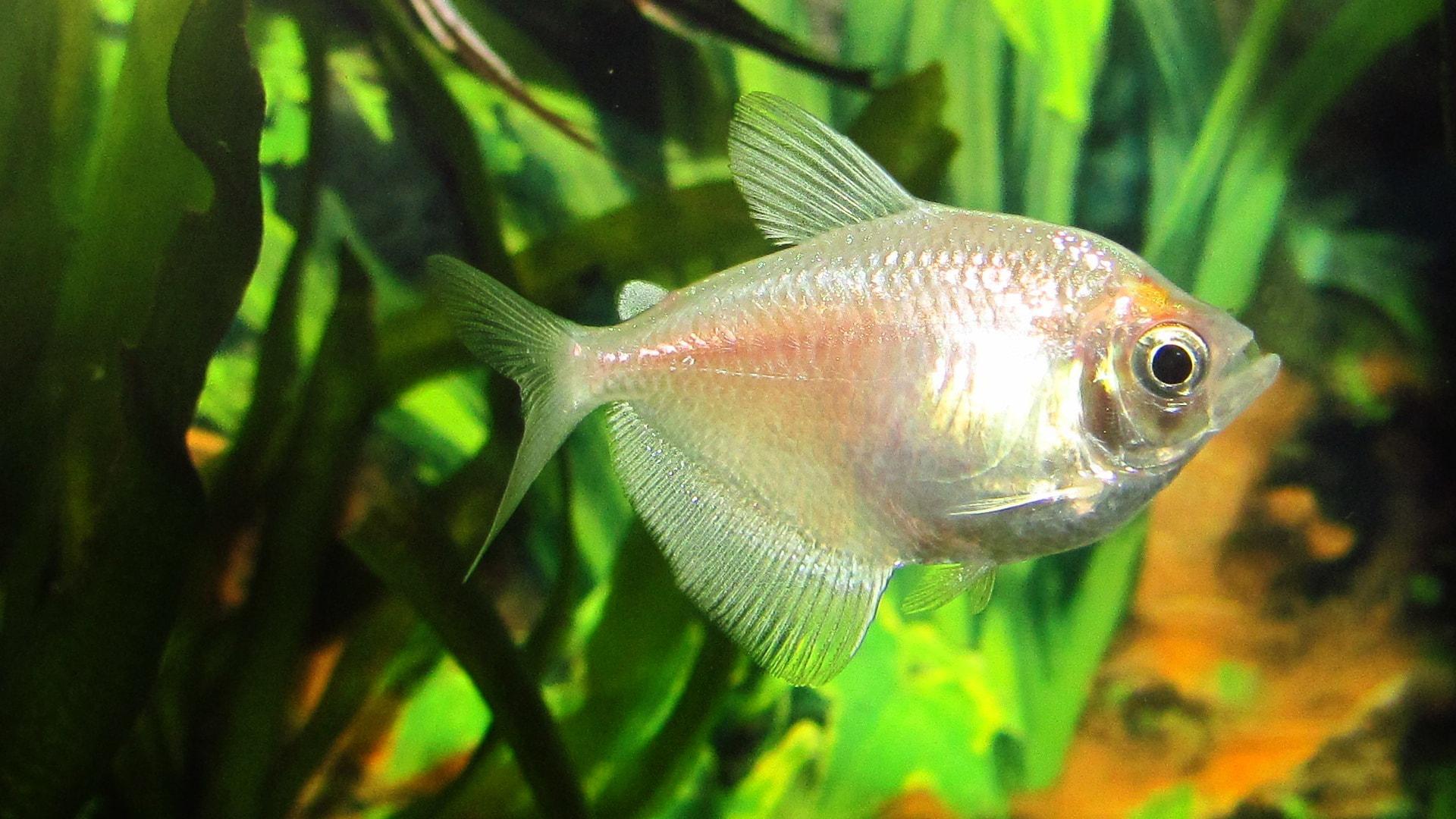 Home Aquarium: Finding the Right Fish