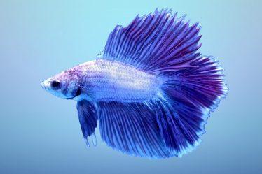 fish tank for bettas