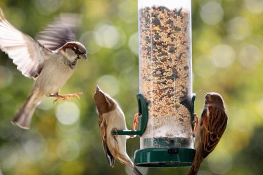 Can Birds Eat Human Food?