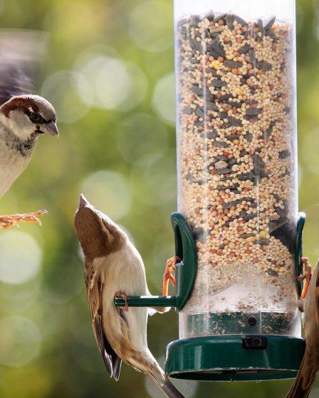 Can Birds Eat Human Food?