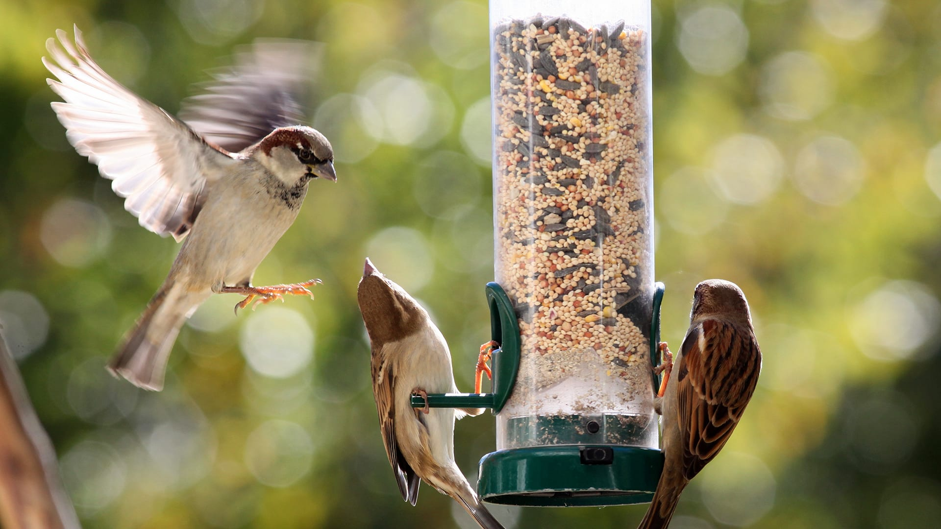 Can Birds Eat Human Food? Yes and No