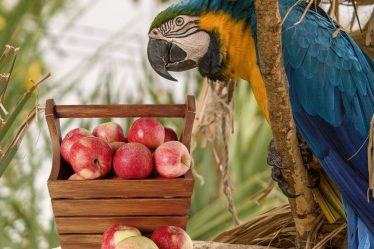 Feed Your Parrot