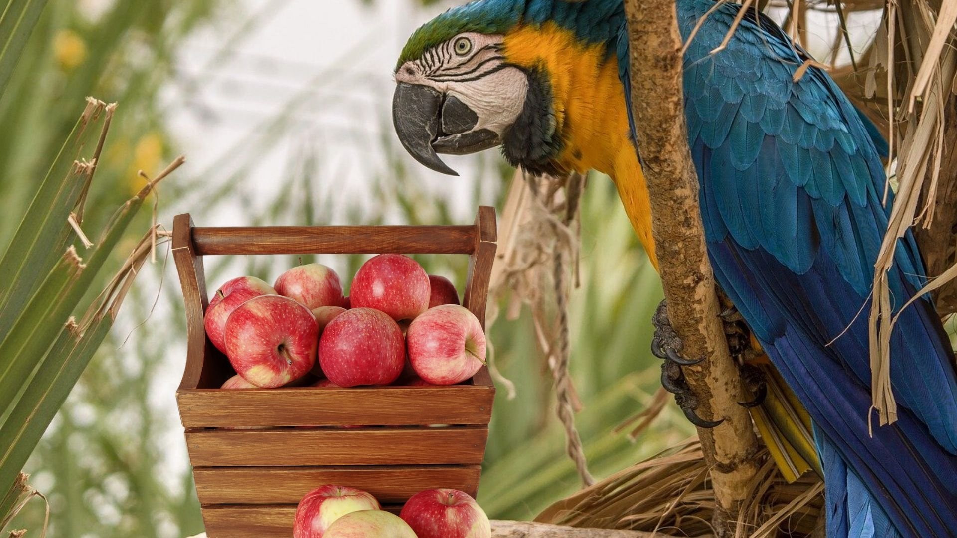 What to Feed Your Parrot and Other Pet Birds
