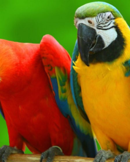 Gifts for Parrot Owners