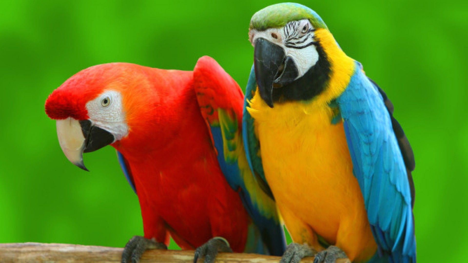 Best Gifts for Parrot Owners Everywhere