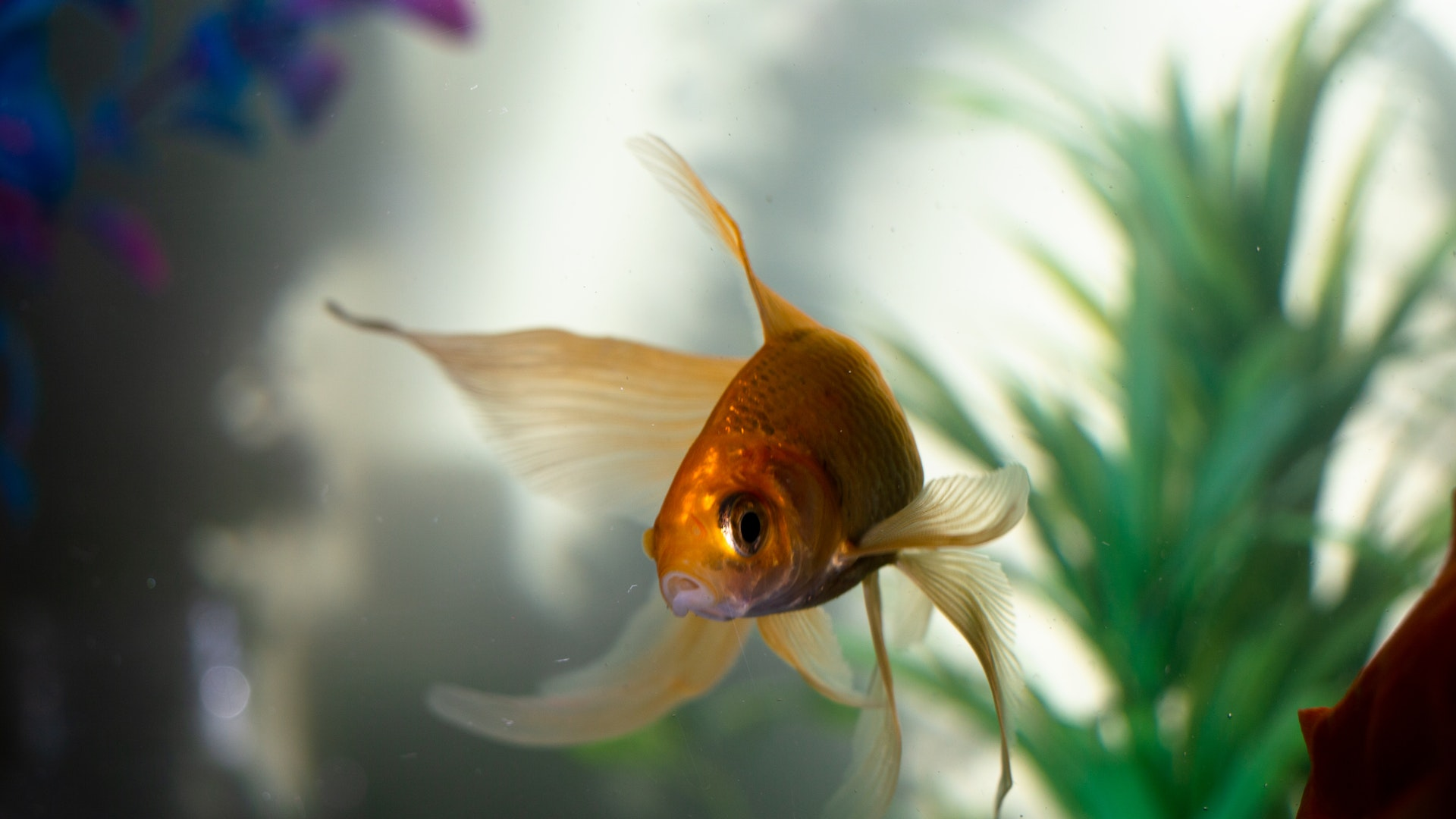 Best Decorations for Fish Tanks