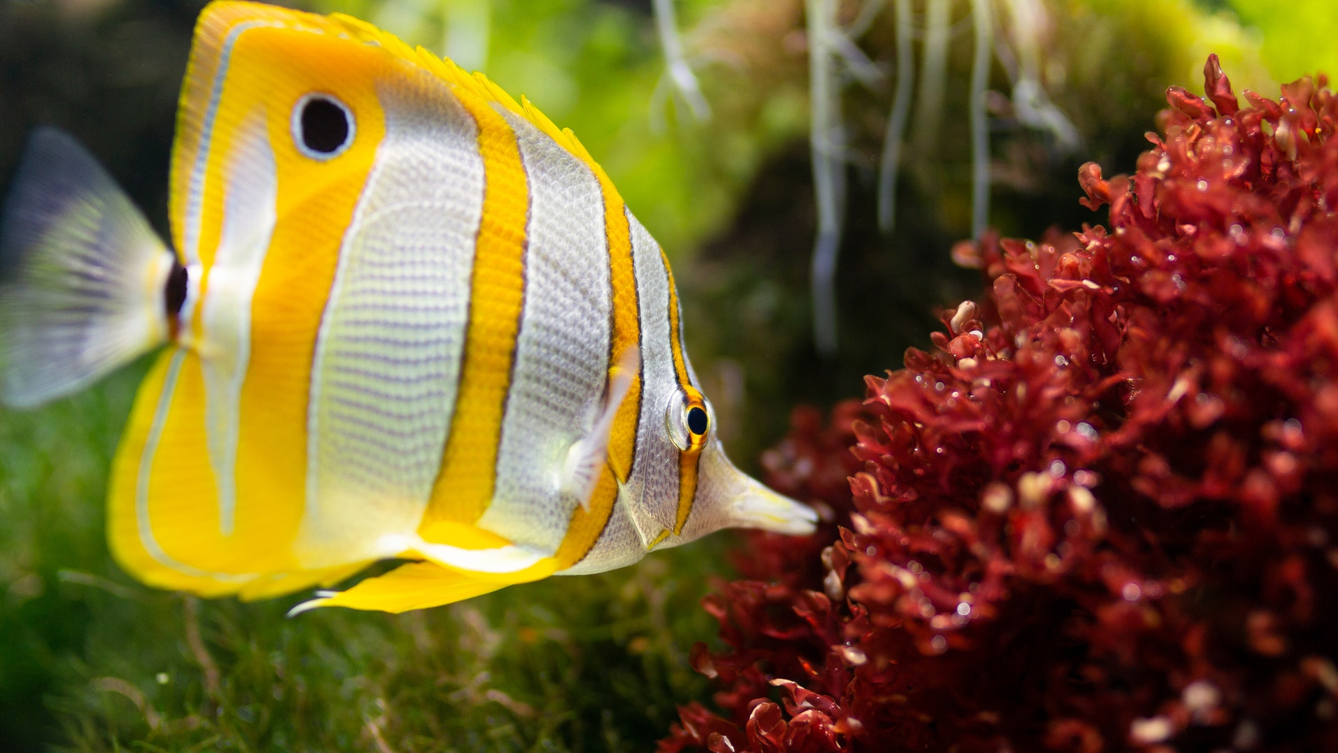Freshwater Aquarium Setup for Beginners