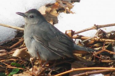 find baby birds