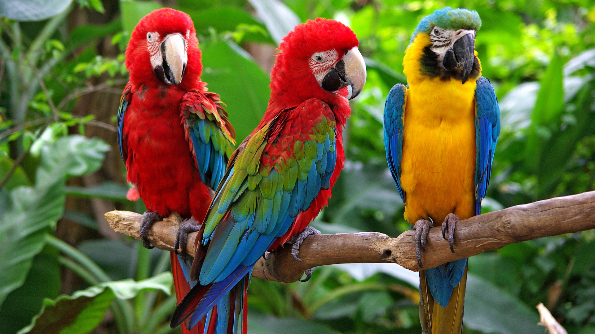 Talking Parrot Tips and Training