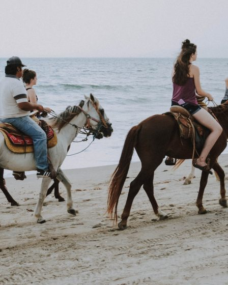 Types of Horses for Riding