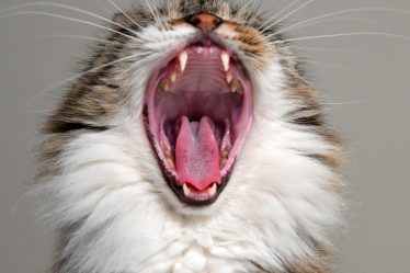 Why Your Cat Bites